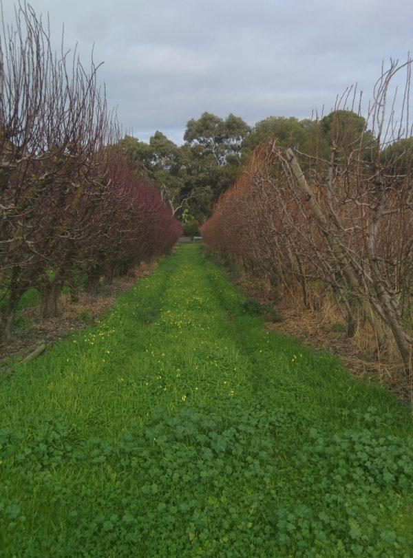 McCarthys Orchard