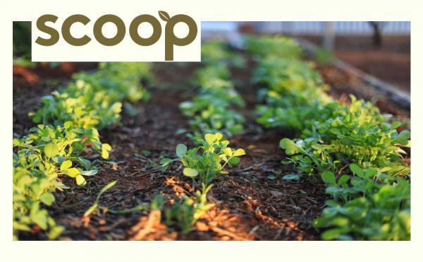 Edible Garden Experience Scoop logo scaled