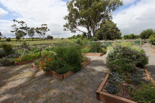 Edible Garden Experience 1