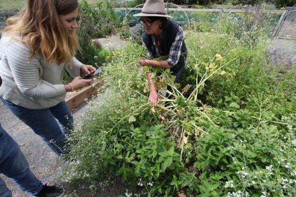 Edible Garden Experience 2