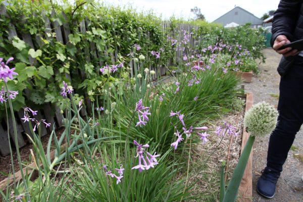 Edible Garden Experience 4